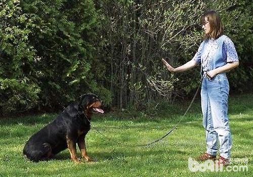 有哪些道具是训练狗狗时要用到的?