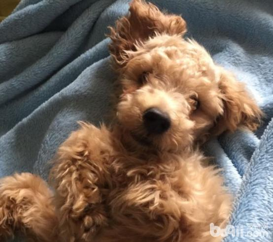 如何在一周内训练会狗狗定点大小便?