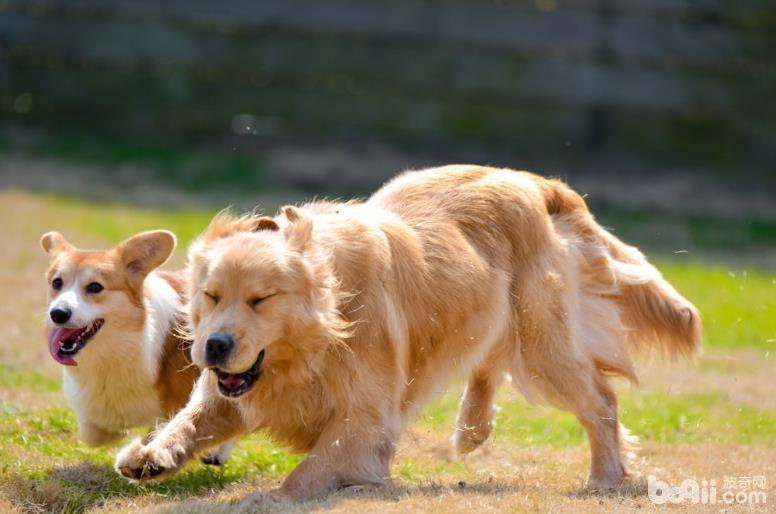 如何训练狗狗不乱吃东西,狗狗拒食训练
