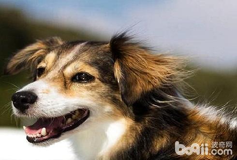 怎么训练狗狗不咬人