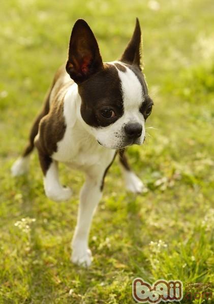 引发狗狗食粪症的原因