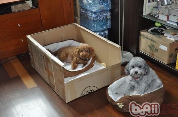 狗狗生产前主人要做好的事