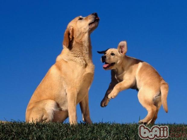 狗狗补钙要慎重 警惕钙过剩