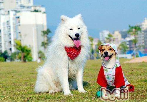 秋季带狗狗出行警惕发情事故