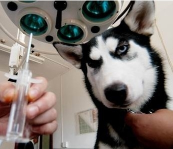 宠物肾结石是怎么形成的以及如何预防