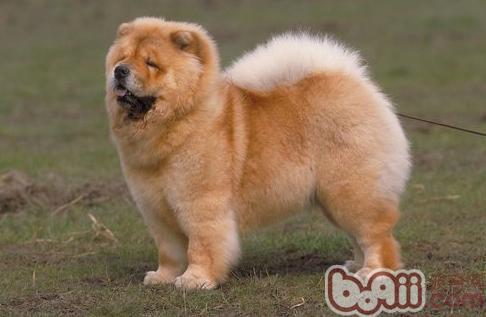 导致狗狗肥胖病的原因有哪些