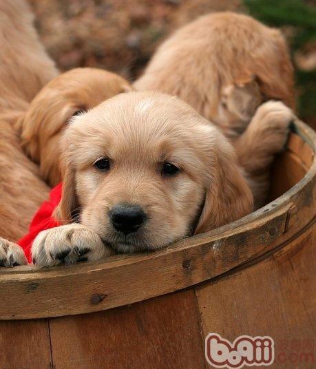 新买狗狗容易生病的原因