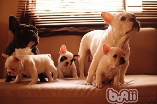 怎样提高幼犬的成活率