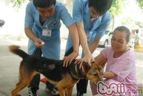 准妈妈也能接种狂犬疫苗了
