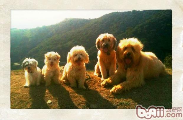狗狗一般疾病时家庭看护