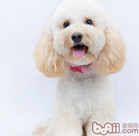 矿物质对犬的应用和缺乏的症状