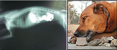 解读狗狗异食癖的原因