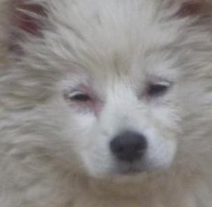 留心狗狗六点生病的征兆