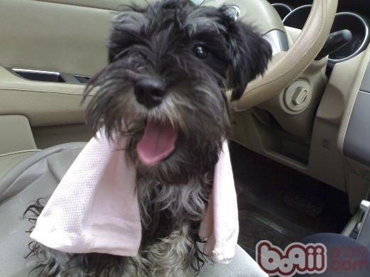 梅雨时候注意狗狗皮肤病