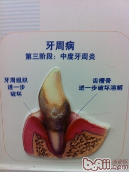 简介常见的犬类牙科问题