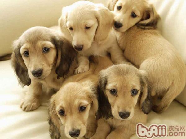 狗狗中毒的治疗措施