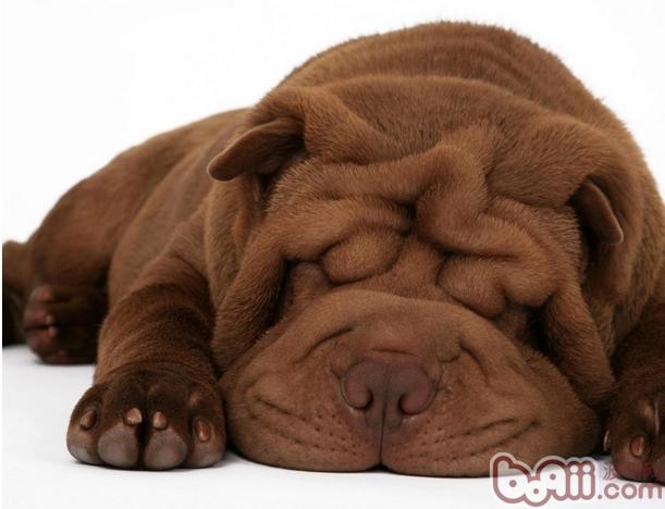 改善狗狗的肥胖症