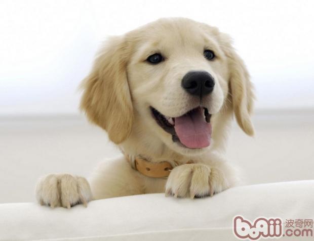 如何预防狗狗口腔疾病