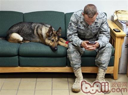 犬的应激综合症的认识和分析