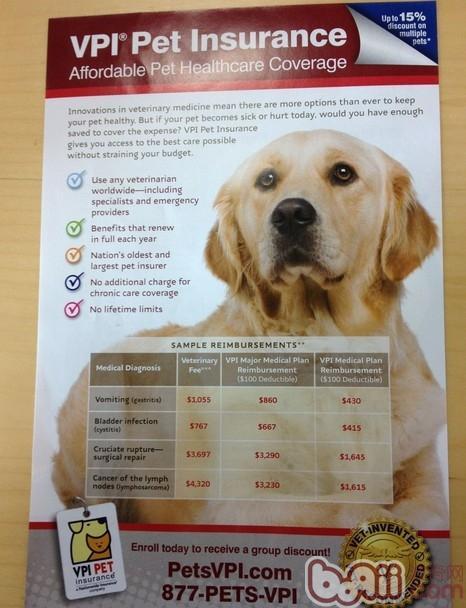 宠物保险正在欧美流行