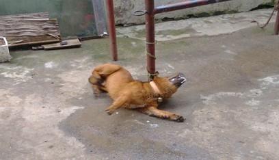 犬有机磷中毒的症状及治疗
