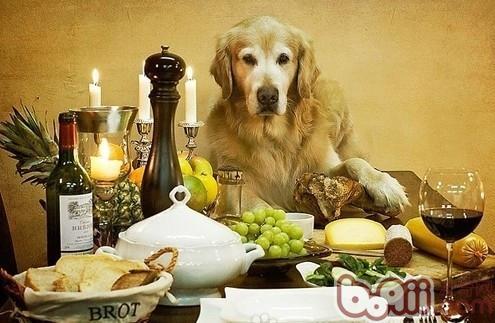 危害狗狗健康的蔬菜有哪些