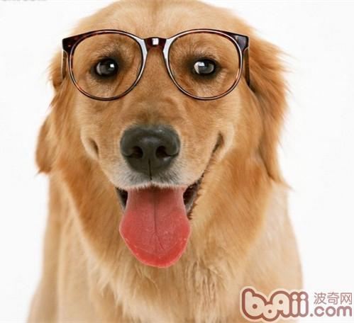 照顾老年狗狗需要注意的五个事项