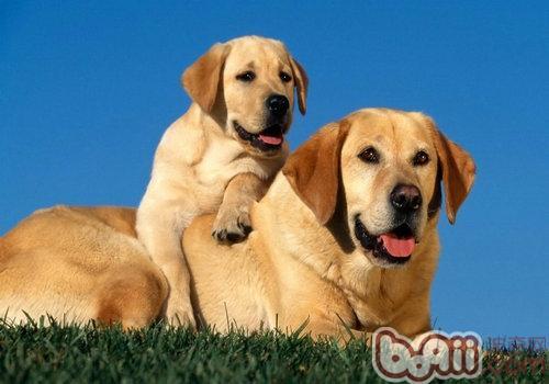 辨认狗狗长寄生虫的方法