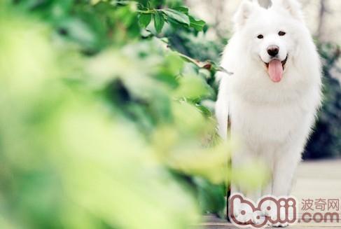 怎样挑选合适的优秀狗狗