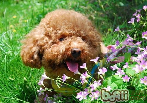 狗狗的夏季养护要点