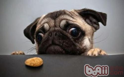 狗狗进食时的三个坏习惯