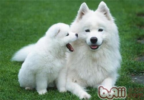 狗狗鼻子干的原因是什么