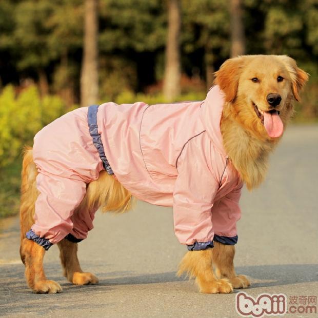 梅雨季节如何保持狗狗身体干燥