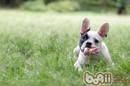 为什么你的狗狗不喜欢玩玩具