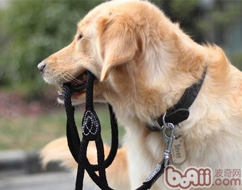 狗狗能否长期佩戴项圈