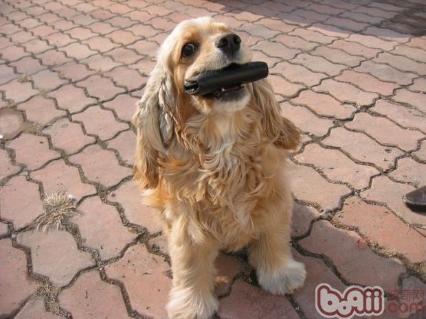 犬猫混养需注意性格问题