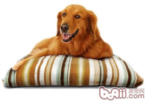 买狗窝垫需要注意哪些问题?