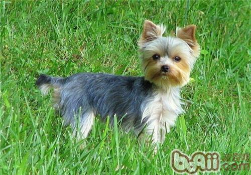 过量补钙对狗狗的危害