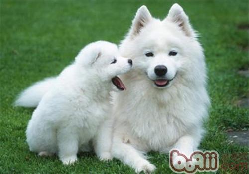 家养狗狗体味很重怎么办?