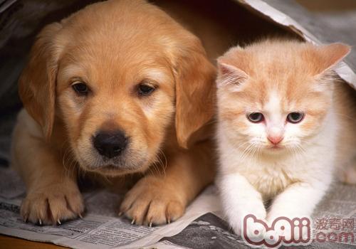 如何让猫狗融洽相处