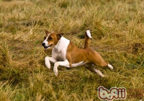 如何避免狗狗运动伤害