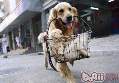 饲养狗狗的一些误区