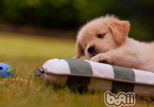 狗狗的睡姿说明的一些问题