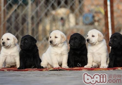 为什么狗是色盲