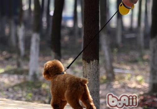 狗绳的正确使用方法