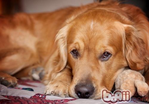 如何与狗培养感情