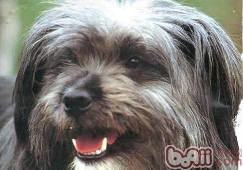 对于狗狗有危险的物品有哪些