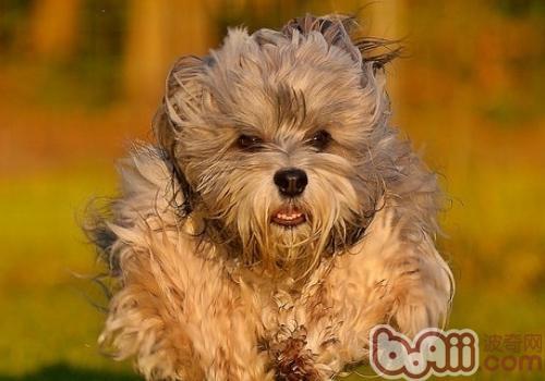 狗狗能用人用牙膏刷牙吗