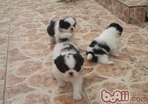 为什么狗狗会互闻对方的生殖器