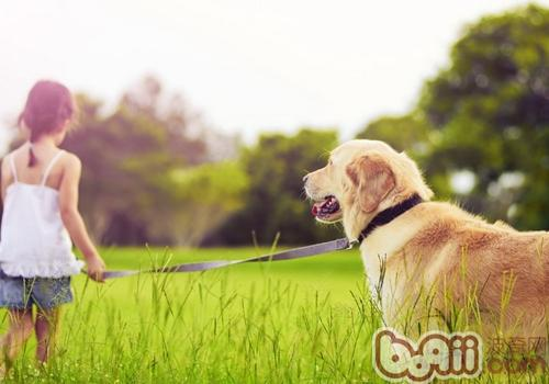 遛狗时让狗狗在自己前面还是后面
